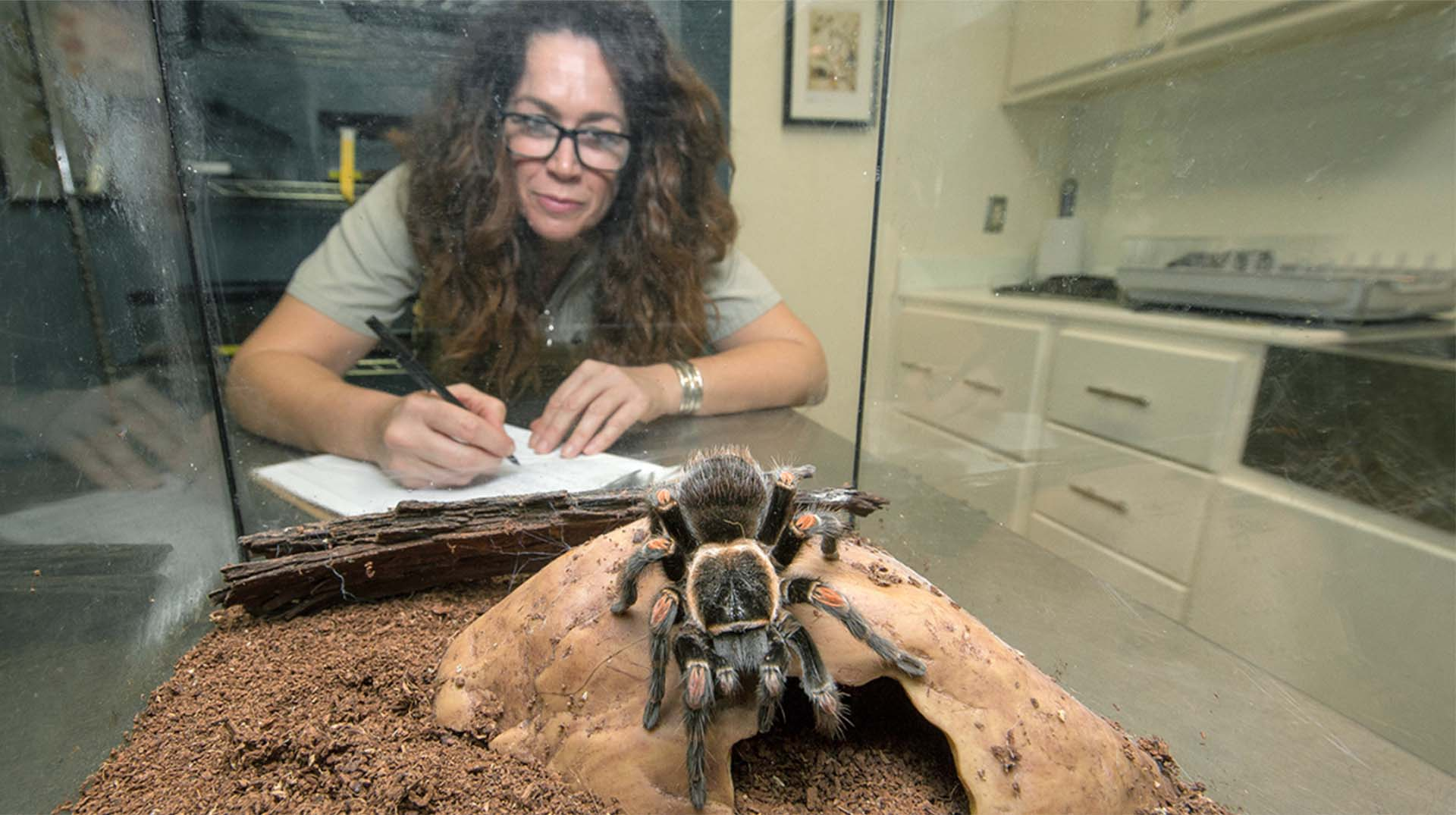 Paige Howorth observing a tarantula at Arachnid Rescue Center.