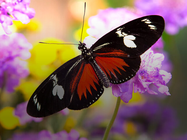 butterfly on purple and white flowers