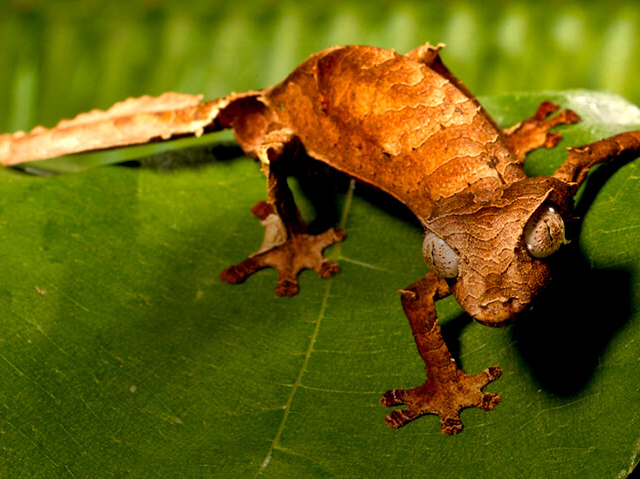 brown gecko on a leaf