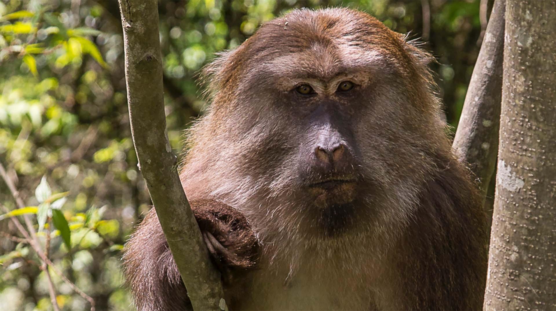 Best Gas Can >> Monkey   San Diego Zoo Animals & Plants