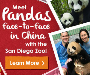 Meet Pandas face-to-face in China with the San Diego Zoo. Learn More.