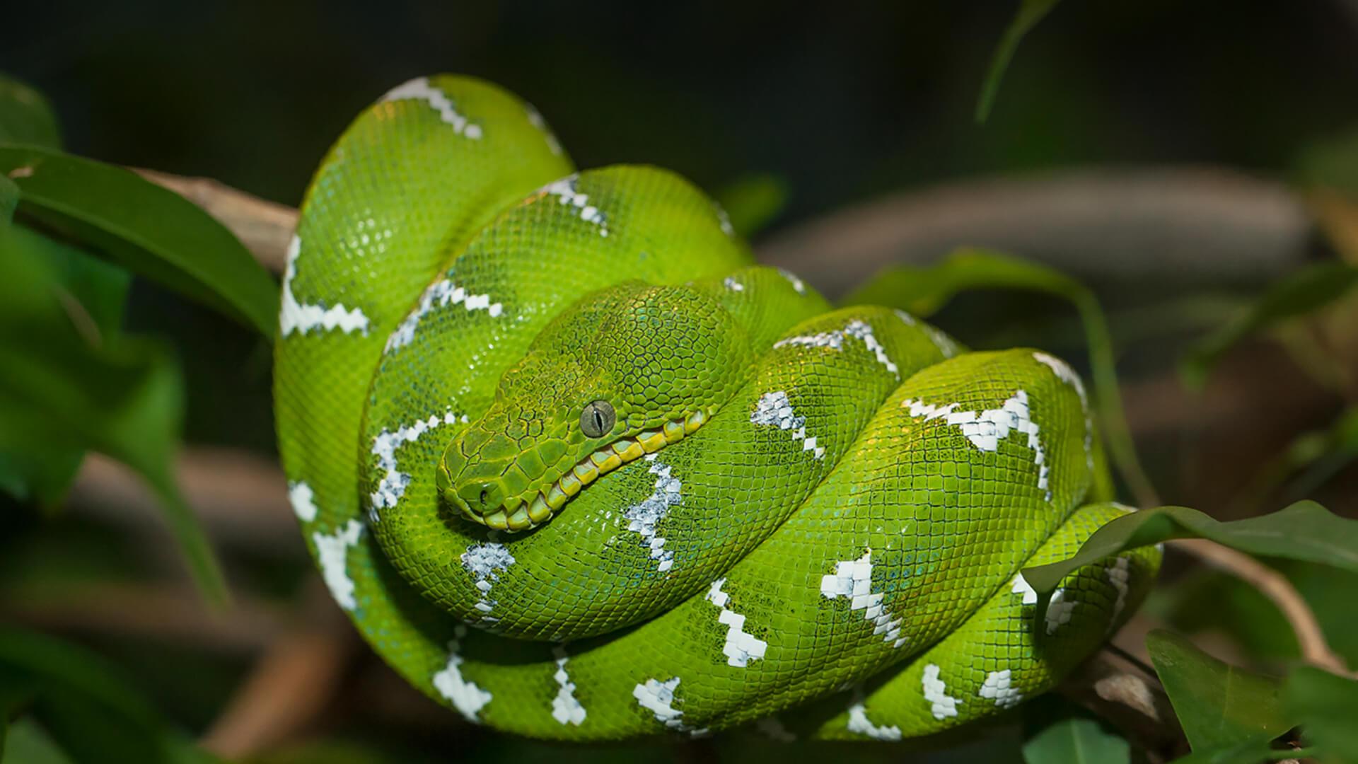 Boa San Diego Zoo Animals Plants