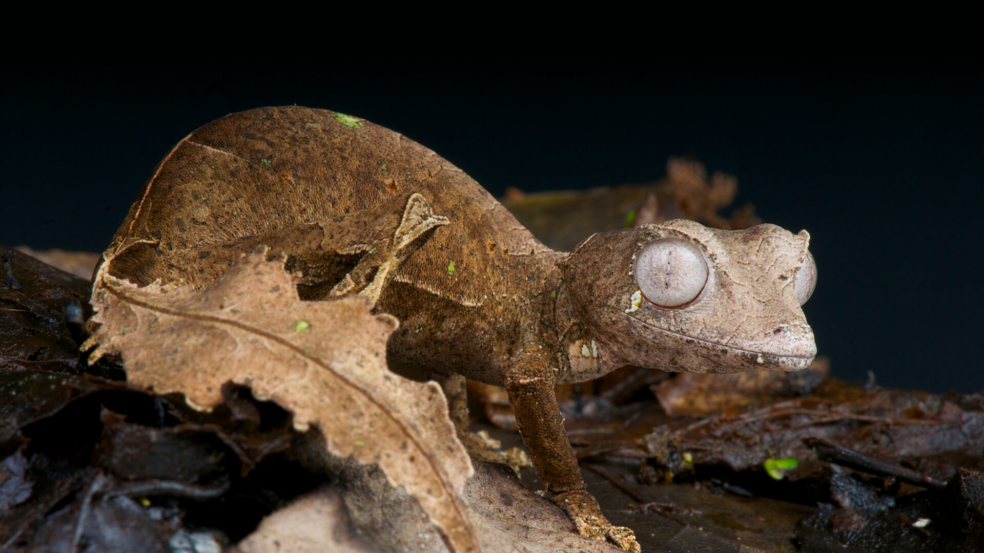 Reptiles | San Diego Zoo Animals & Plants