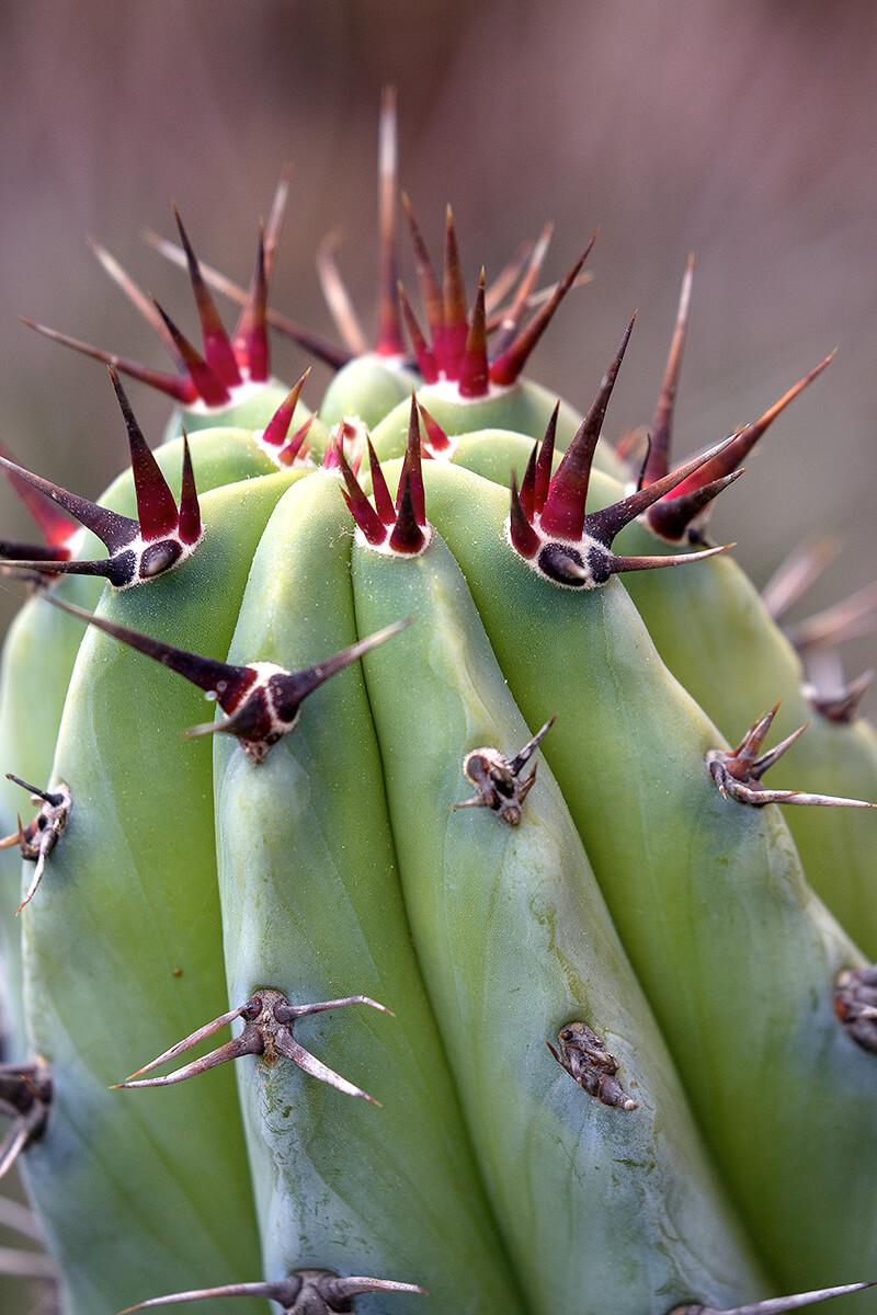 mojave cactus bird