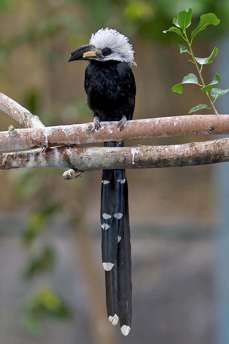 Hornbill   San Diego Zoo Animals & Plants