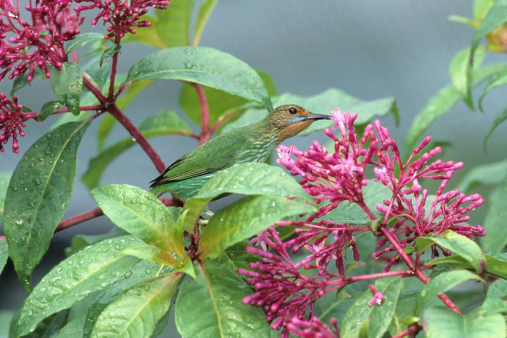hummingbird san diego zoo animals amp plants