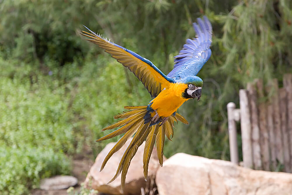 Macaw | San Diego Zoo Animals & Plants