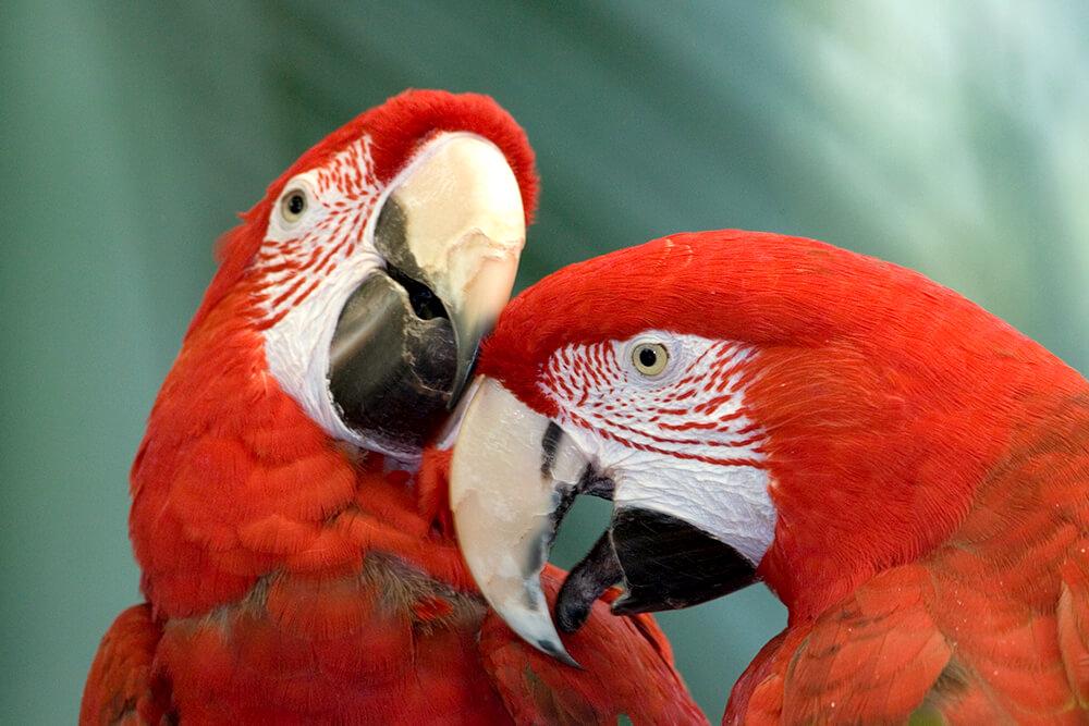 macaw san diego zoo animals plants