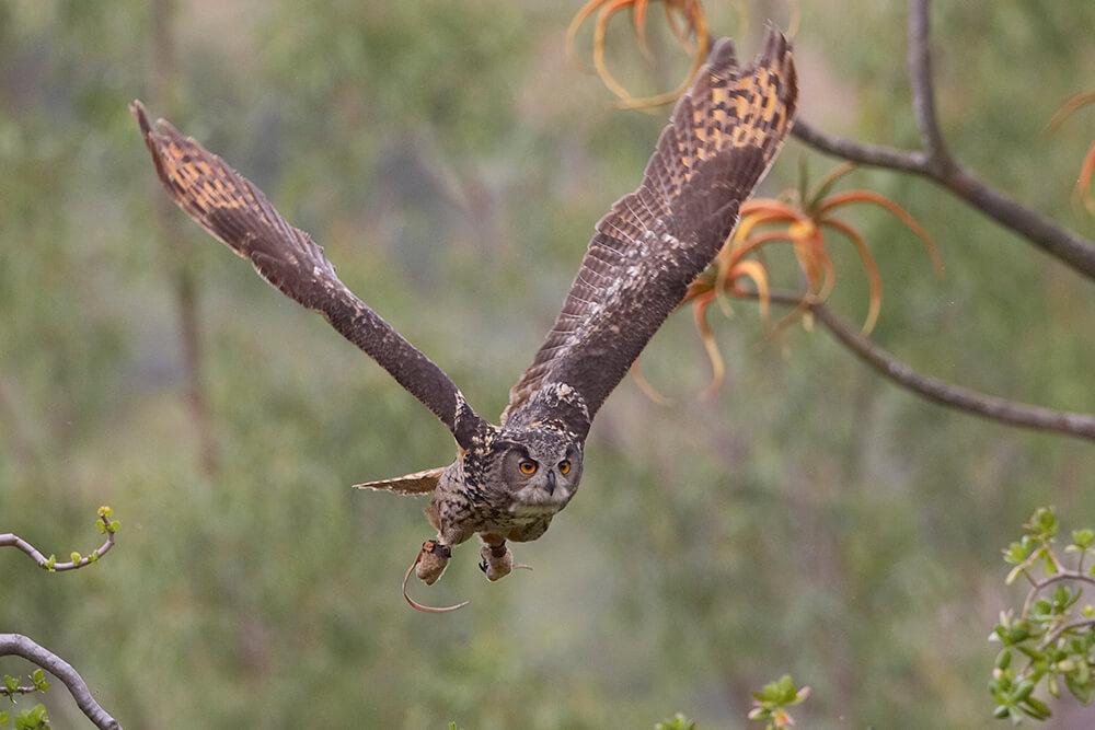 owl san diego zoo animals plants