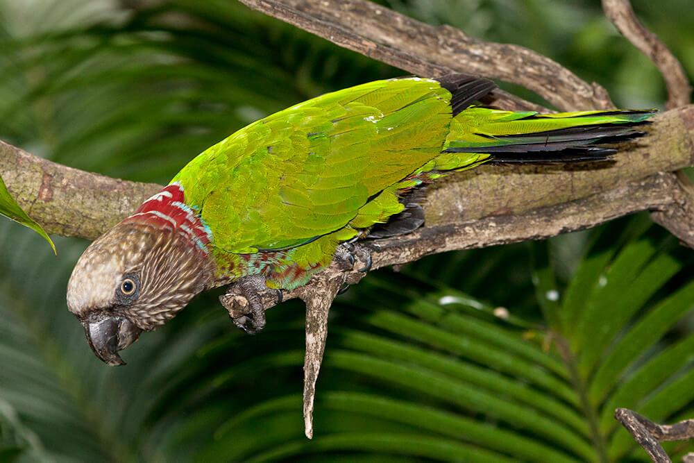 Parrot | San Diego Zoo Animals & Plants