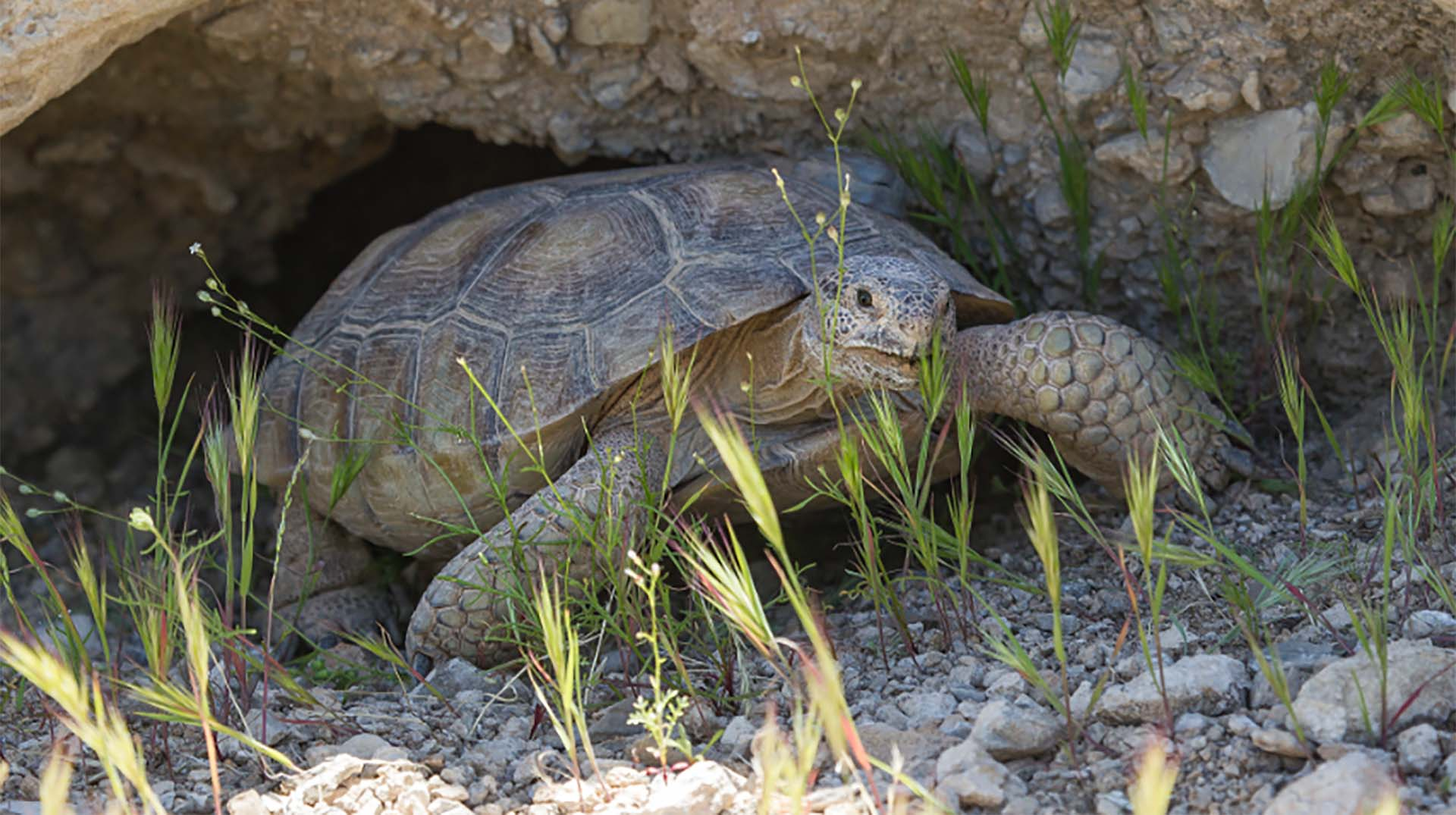 turtle and tortoise san diego zoo animals u0026 plants