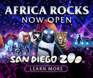 Africa Rocks, Now Open. San Diego Zoo.