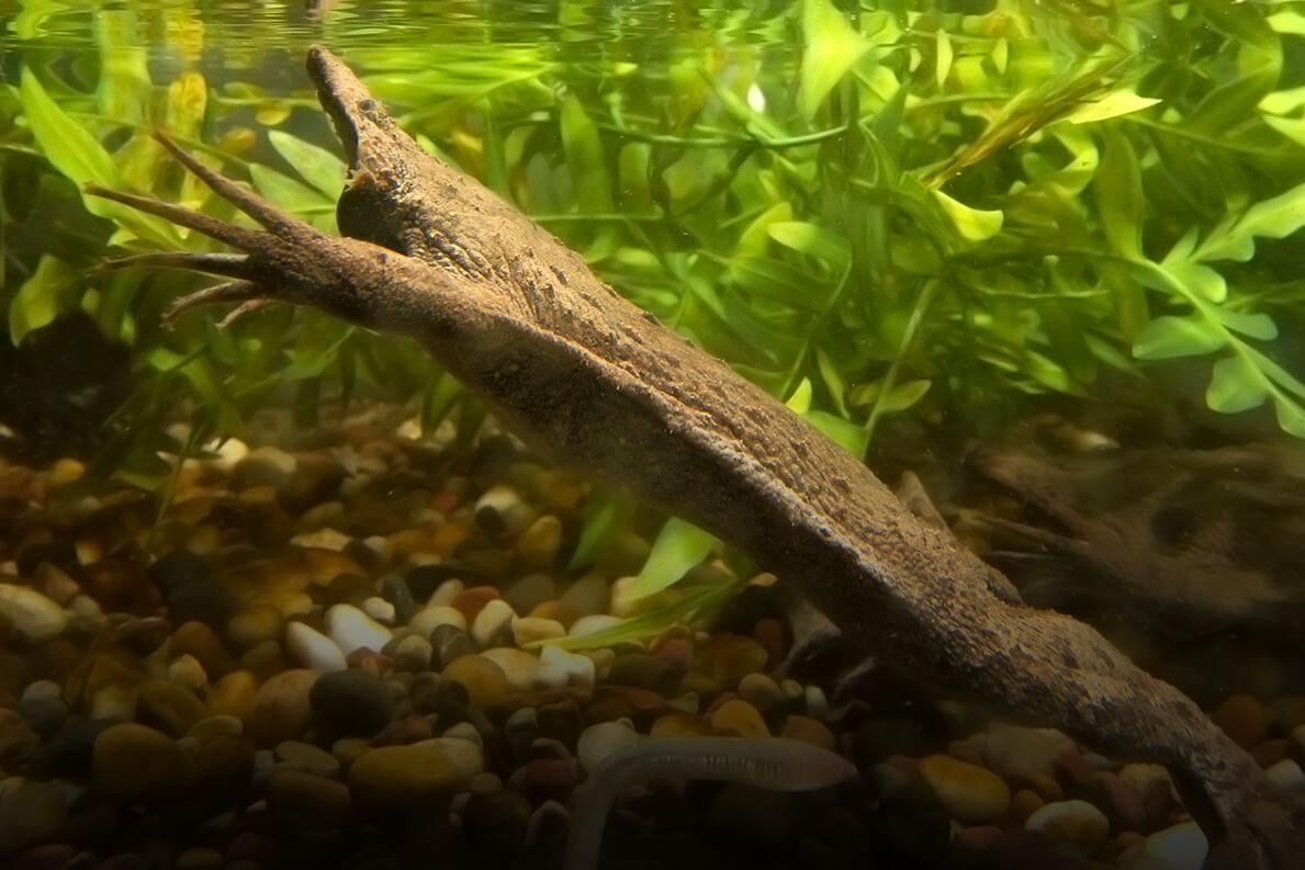 surinam toad san diego zoo animals plants