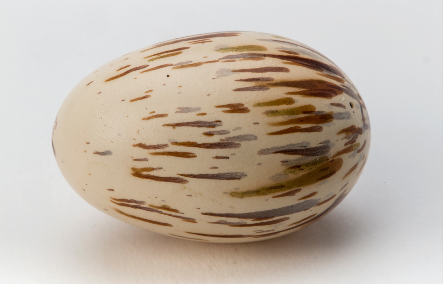 Cock-of-the-rock egg.