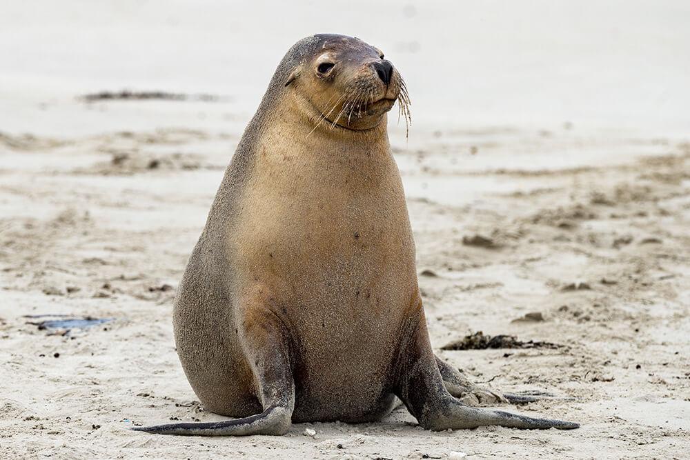 Sea Lion | San Diego Zoo Animals & Plants