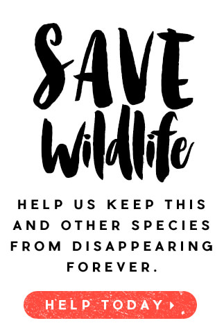 Save Wildlife. Help us keep this and other species from disappearing forever.