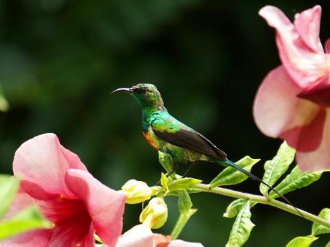 Beautiful Sunbird San Diego Zoo Animals Plants