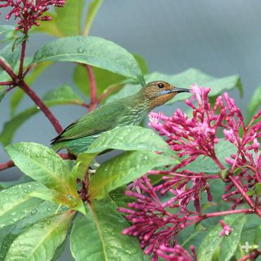 As hummingbirds use their bill to get at a flower's nectar, pollen from the flower dusts their head. When they zip to the next blossom, they deposit the pollen to help the flower reproduce.