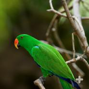 Parrots are known for being very vocal: their squawks, screams, and screeches can be heard from far away in the forests.
