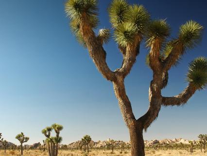 Desert   San Diego Zoo Animals & Plants