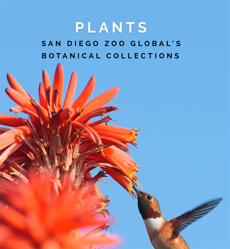PLANTS: San Diego Zoo Global's Botanical Collection